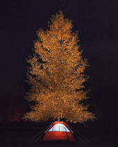 tent under next to a fall tree, under stars in the night sky