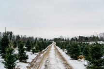 Christmas tree lot and snow