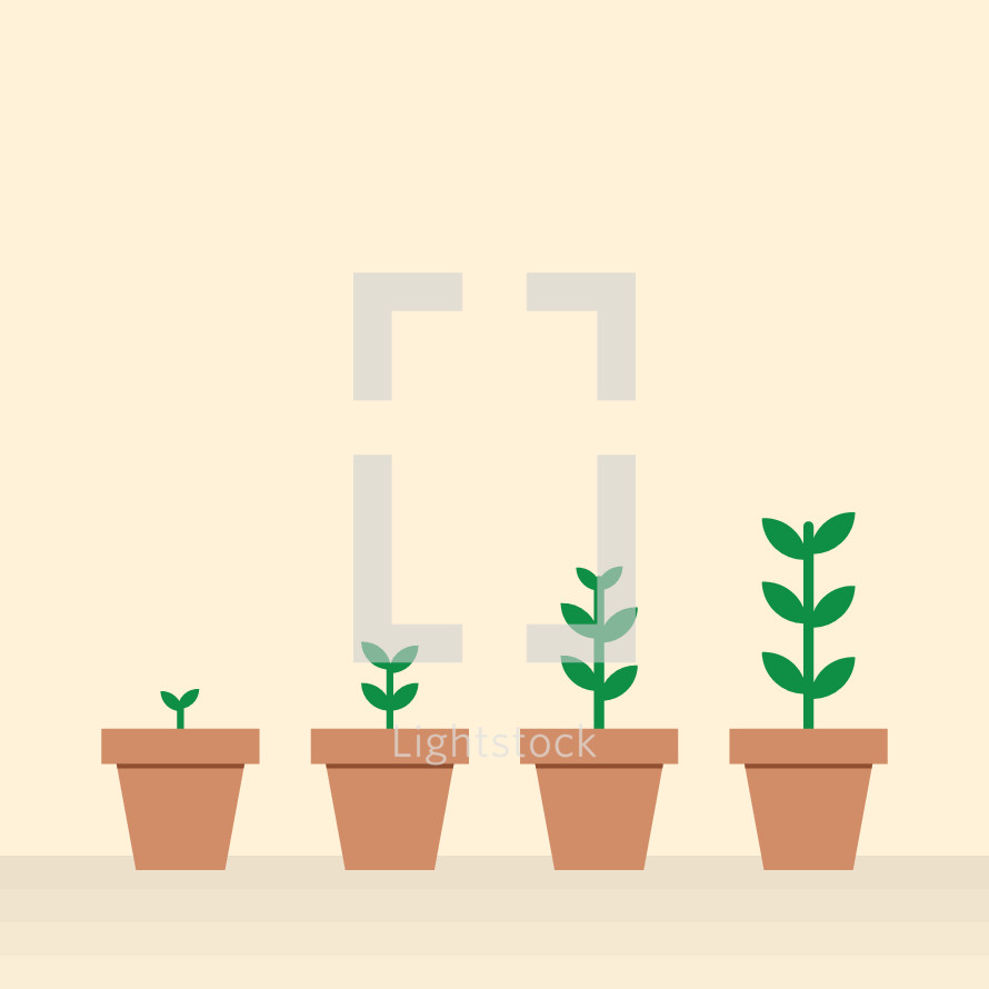 growth of plants in pots.