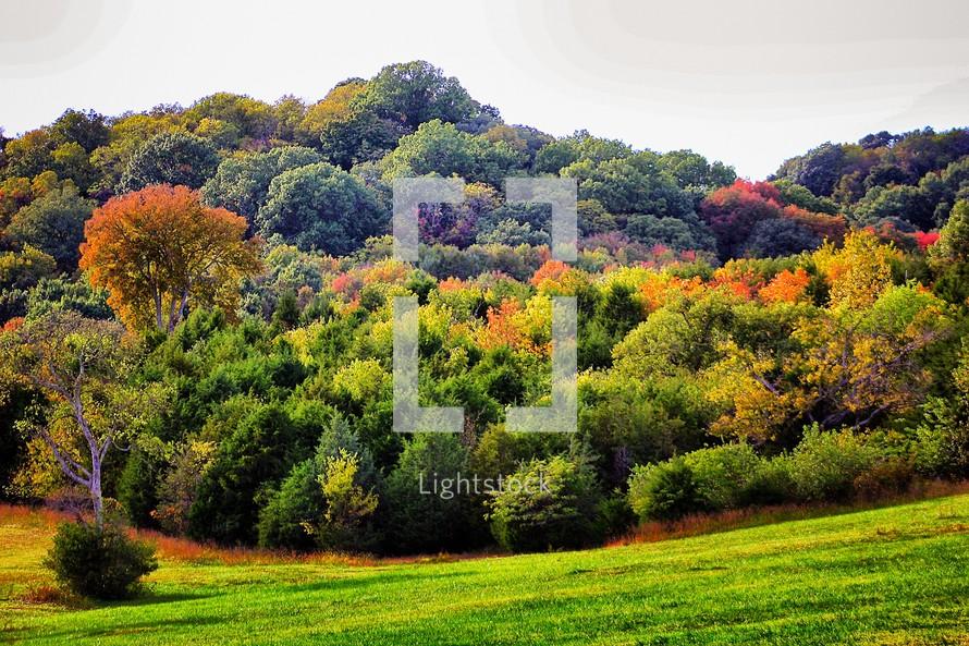 Lush mountains in fall