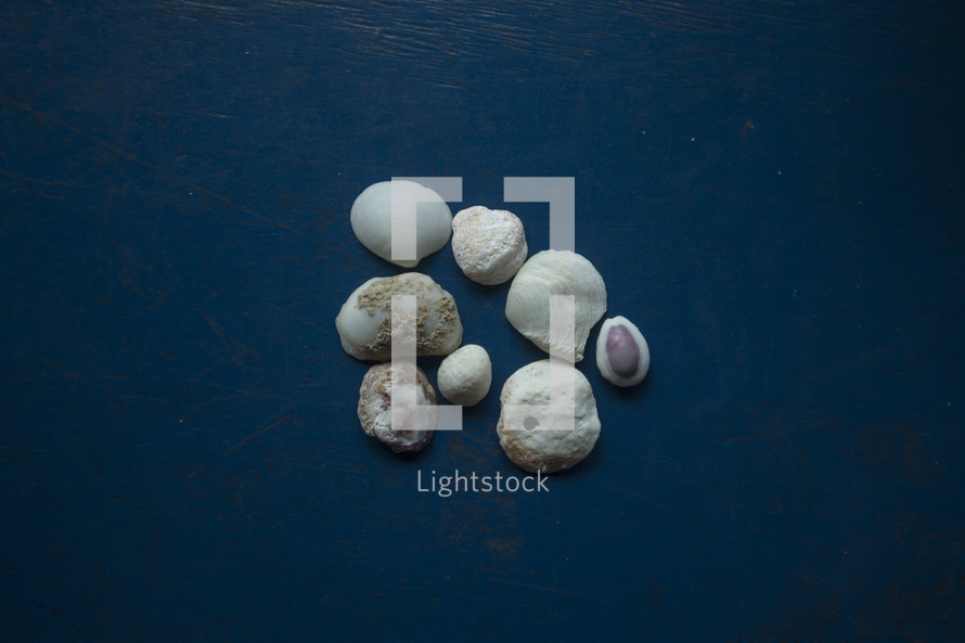 seashells against a cobalt blue background
