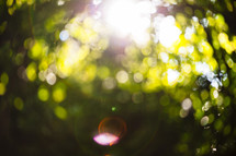 bokeh sunlight outdoors
