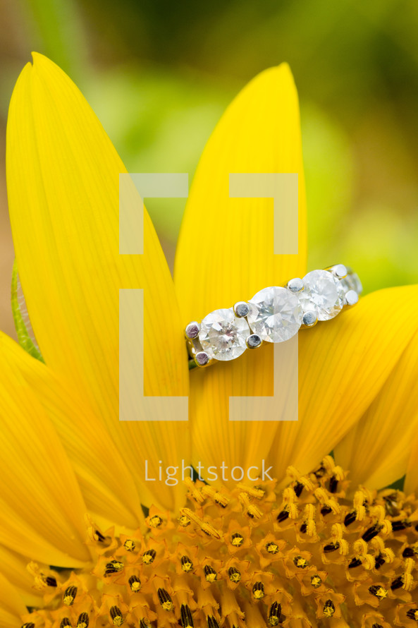 Engagement ring hanging on yellow flower petal