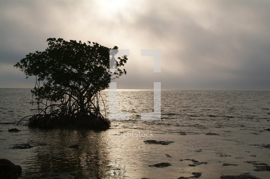Mangrove tree in calm water against stormy clouds