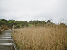 wooden footbridge over a marsh
