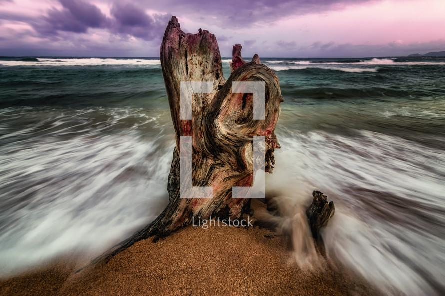 battered tree stump on a beach