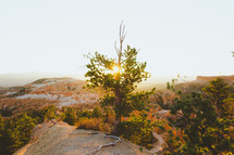 sunlight behind a tree growing on a mountaintop