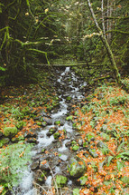a trickling brook in a forest