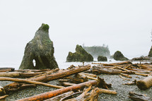 trees and driftwood washed onto a shore