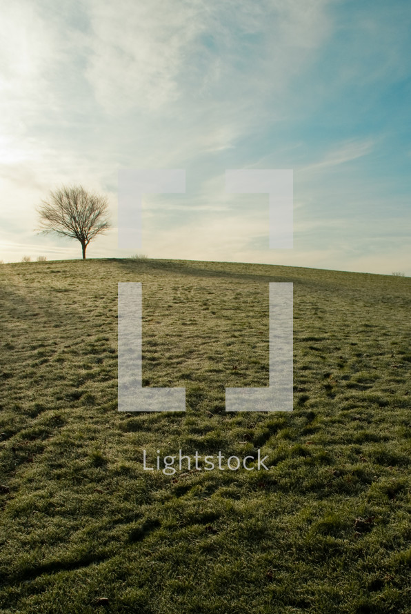 Tree on green grass hill