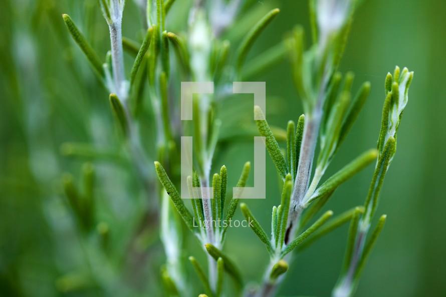 Green plant stems