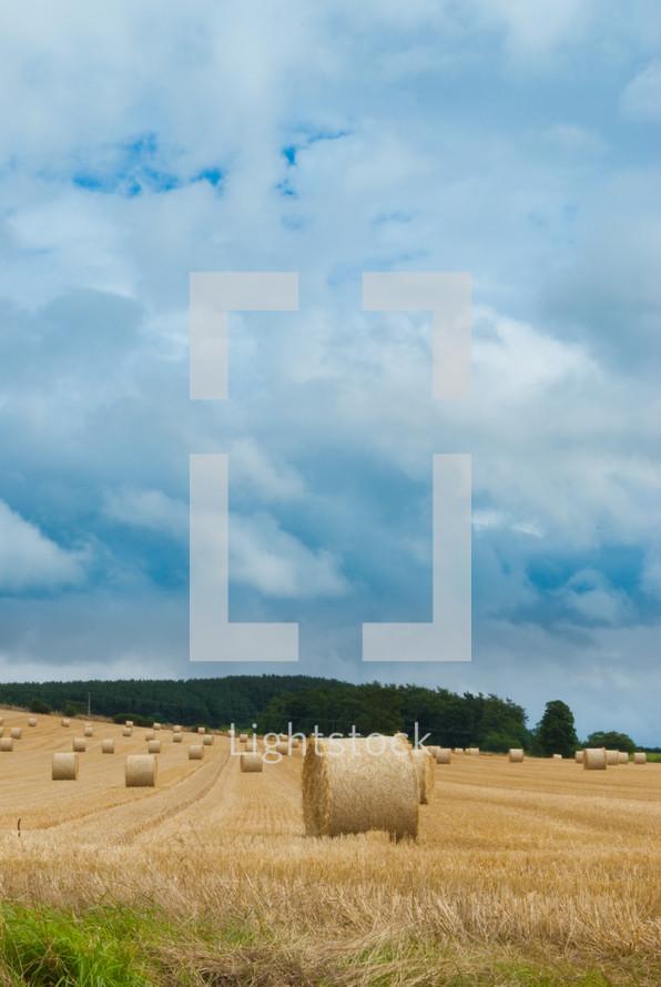 Barrels of hay in a field