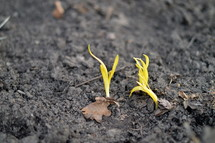 sprout in rich soil