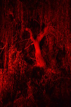 trees in glowing red light