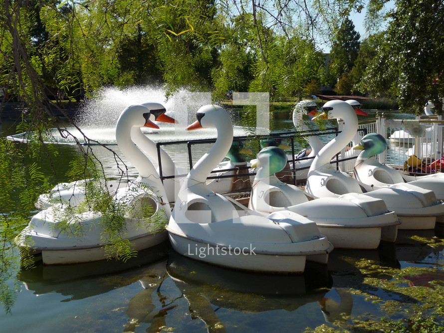 swan boats in a pond