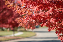 red leaves on a tree over a road
