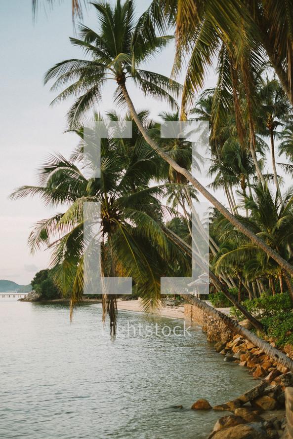 Palm trees along a beach shore