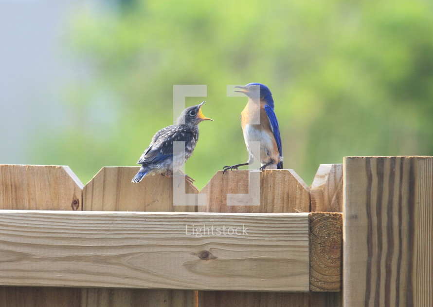 mother and baby bird on a fence