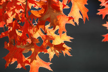 Branch of fall leaves.