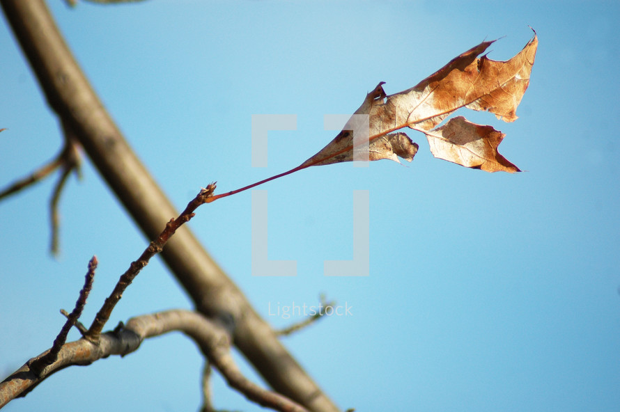 dead leaf on a branch