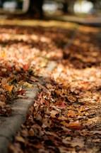 fall leaves along a curb
