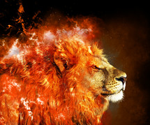 fire and lion
