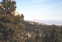 pine forest and mountain peaks