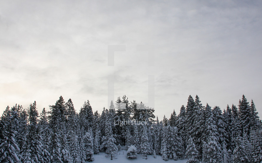snow covered tree in a forest