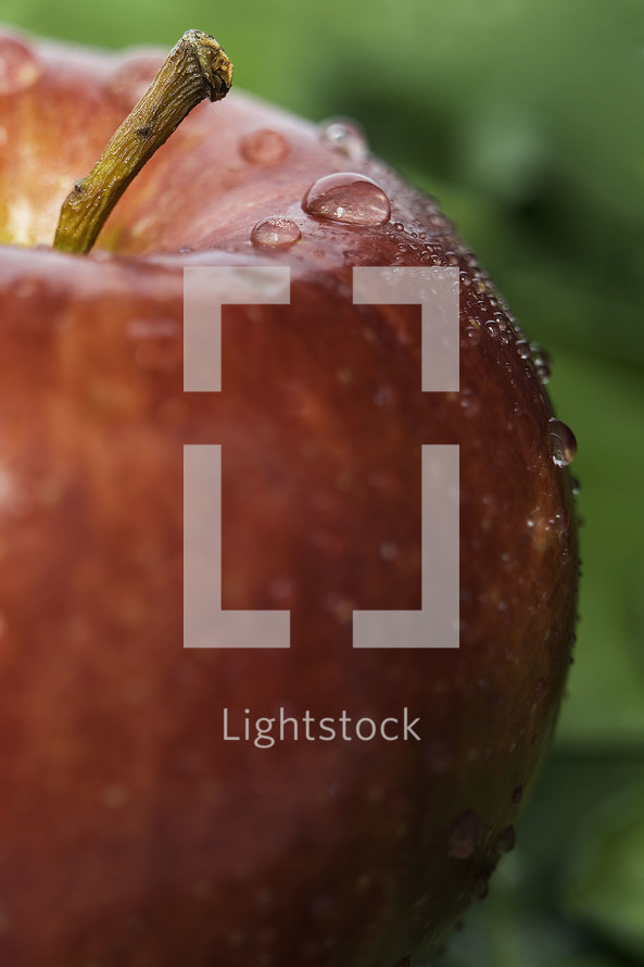 water drop on an apple
