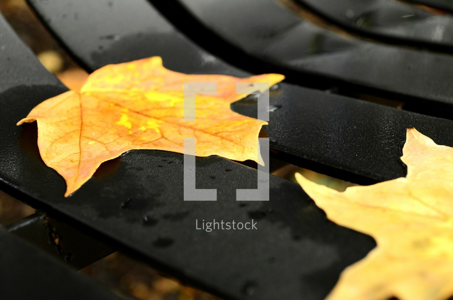 fall leaves on a park bench