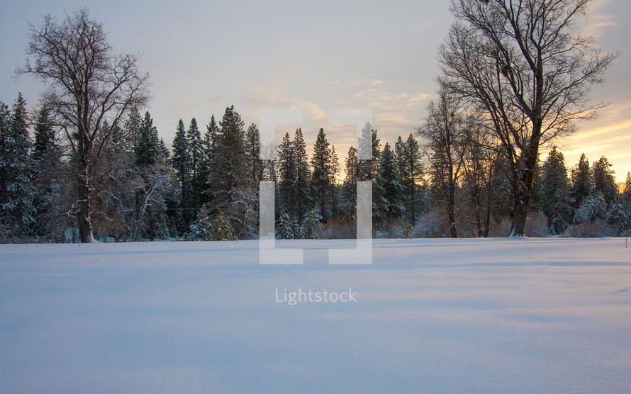 peaceful beauty of snow covered trees and ground
