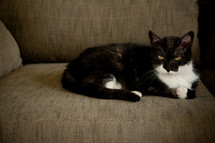 cat resting on a couch
