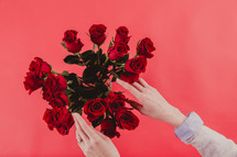 A woman's hands reaching toward a bouquet of red roses.