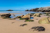 seaweed and rocks on a beach