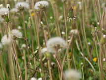 Field of weeds.