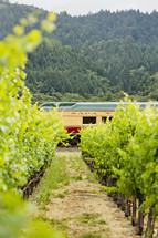 Wine train napa valley passing thru a vineyard row