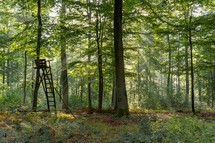deer stand in a forest
