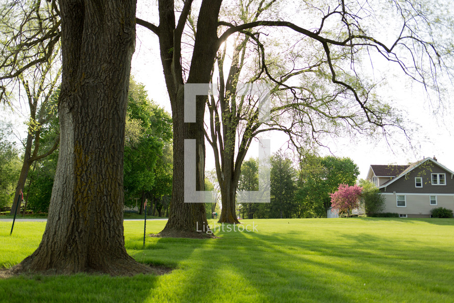 budding trees and lush green grass