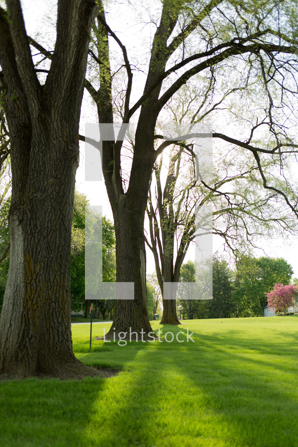 budding tree branches and lush green grass