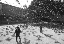 large flock of pigeons and children