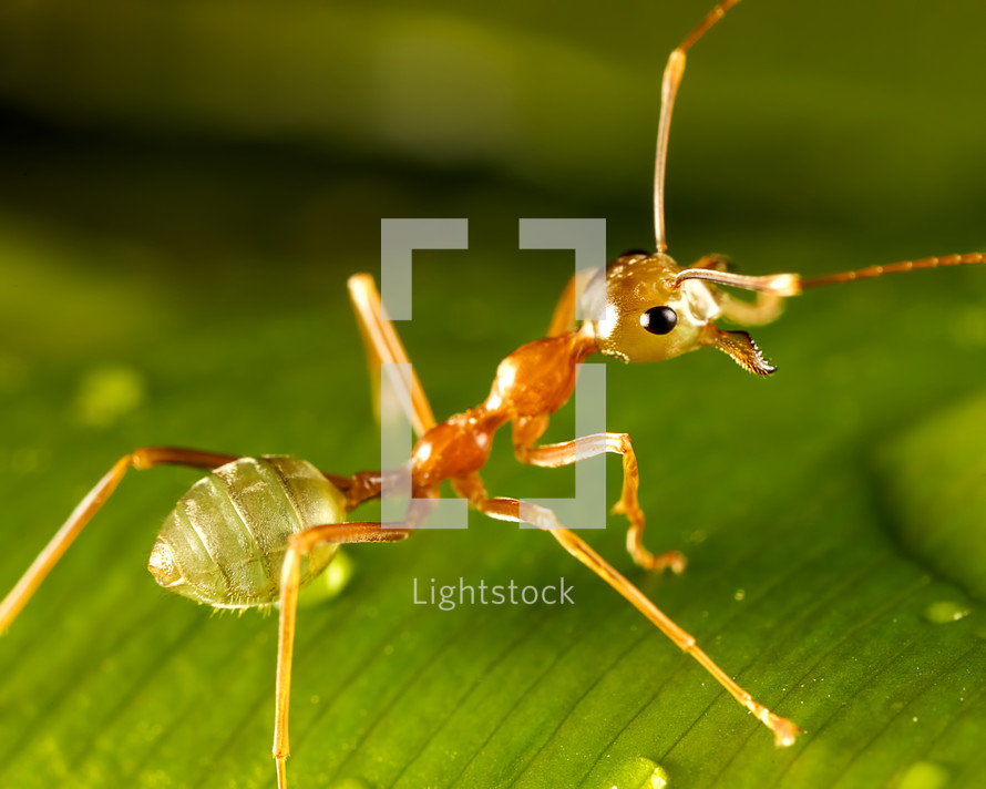 ant close-up