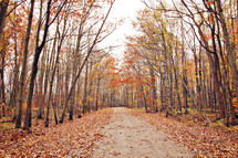 Orange leaves, red leaves, a pathway into trees. A forest. A road. Fall. Autumn. Beauty.
