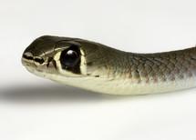 A snake's head.