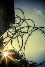 Sun shining through barbed wire