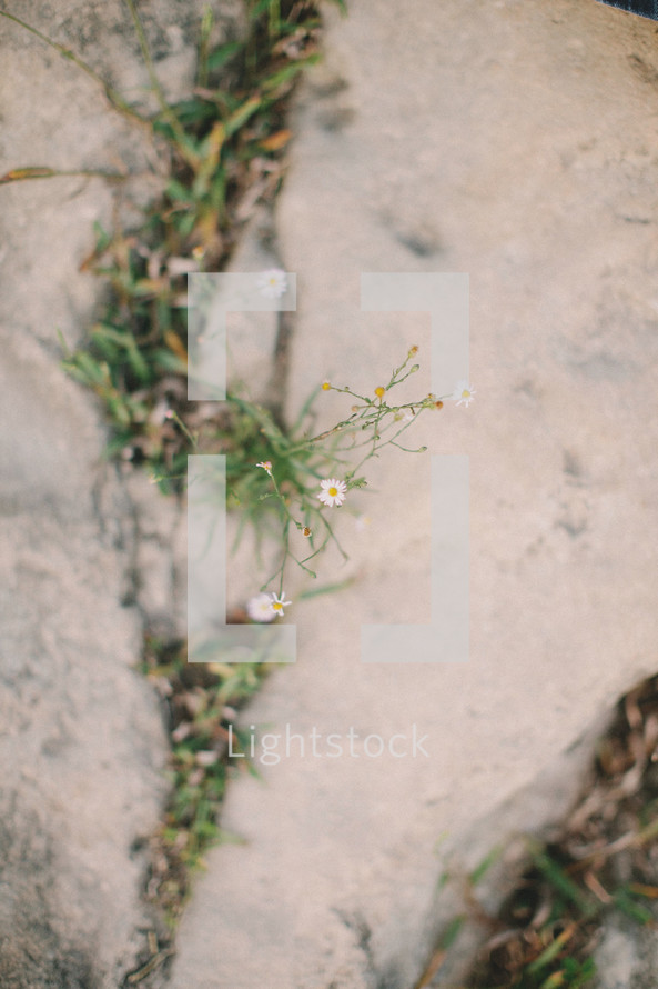 Grass and flowers growing through cracks in cement.