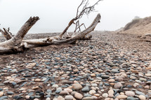 driftwood on a beach full of stones