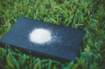 salt on a Bible in the grass