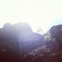 sunlight on a tree growing on a rocky mountain side
