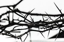 Close-up of a crown of thorns.