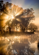 morning sunlight over a pond